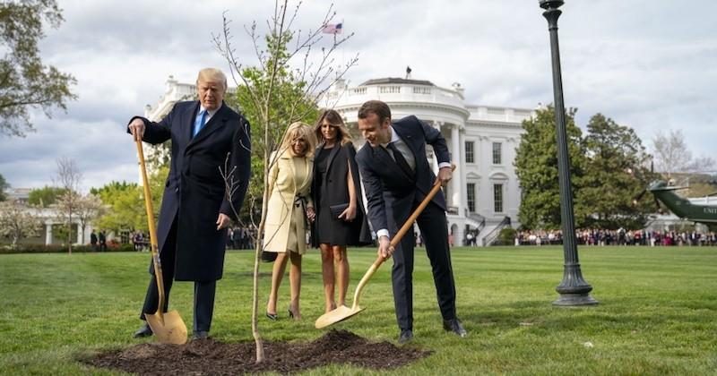 L'arbre planté par Trump et Macron, censé symboliser leur amitié, est mort