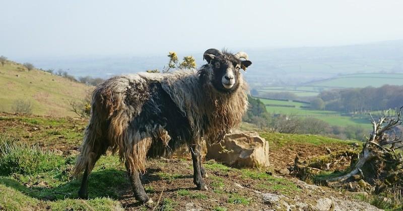 Tout plaquer pour s'occuper de moutons sur une île, voici le job de rêve qui vous attend en Écosse