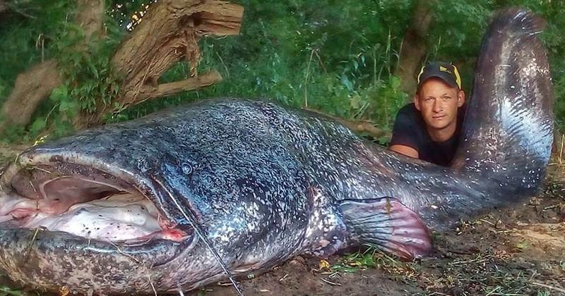 Il pêche un silure de 2,58 mètres dans la Dordogne et ce n'est pas le record