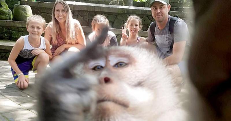 Un singe attrape un appareil photo et fait un selfie avec un doigt d'honneur en prime