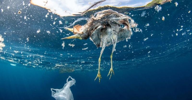D'après WWF, la France est le plus gros producteur de déchets plastiques en Méditerranée