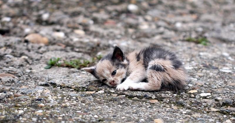 La France «championne d'Europe» des abandons d'animaux dans la nouvelle campagne de 30 Millions d'Amis