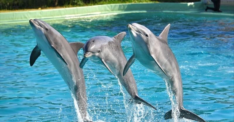 Le Canada va interdire la captivité et l'élevage de cétacés !