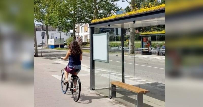 À Utrecht, 316 toits d'abris bus sont fleuris pour sauver les abeilles !