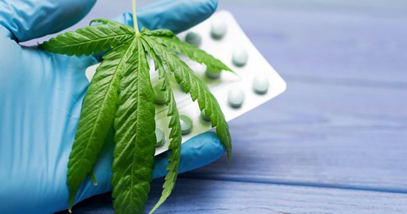 L'ANMS donne son feu vert à l'expérimentation du cannabis thérapeutique
