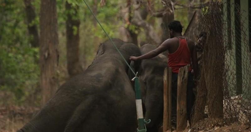 Un photographe dénonce la maltraitance effectuée sur les éléphants dans un parc animalier en Inde !