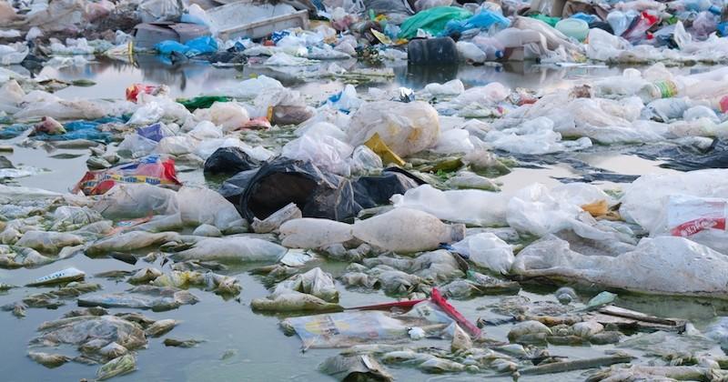 Nous avalons 5 grammes de plastique par semaine, selon un rapport WWF