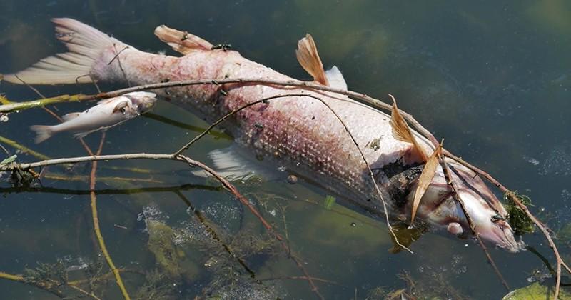 3 tonnes de poissons sont morts dans la Seine après un incendie dans une usine