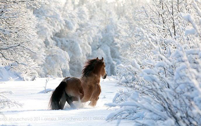 Photos drôles où touchante de toute animaux autres que les ânes ! 02animaux-neige