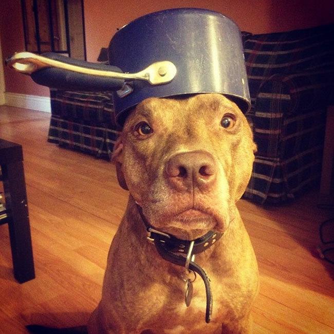 Peut-on croiser n'importe quelles races de chiens