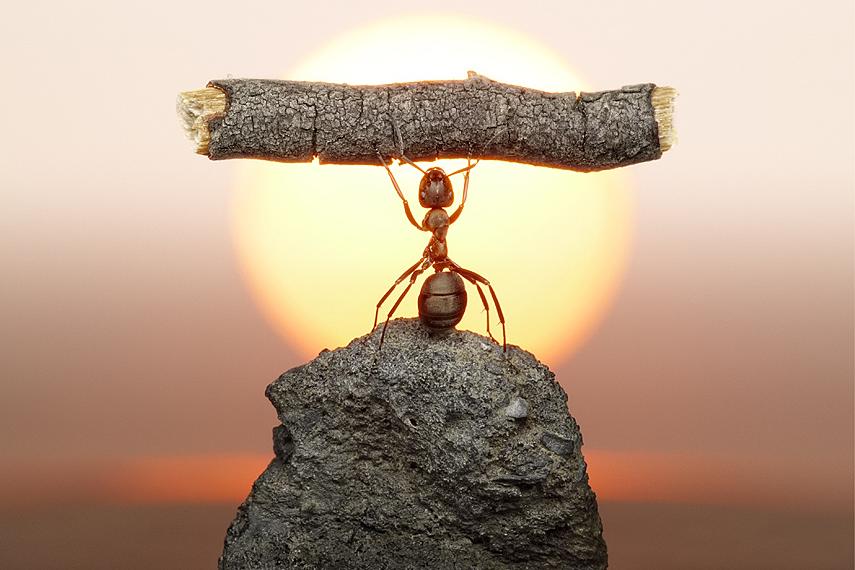 6 petites leçons de management que chacun devrait absolument connaître. Trop drôle ! dans Humour (284) 1217072-les-droles-de-fourmis-d-andrey-pavlov