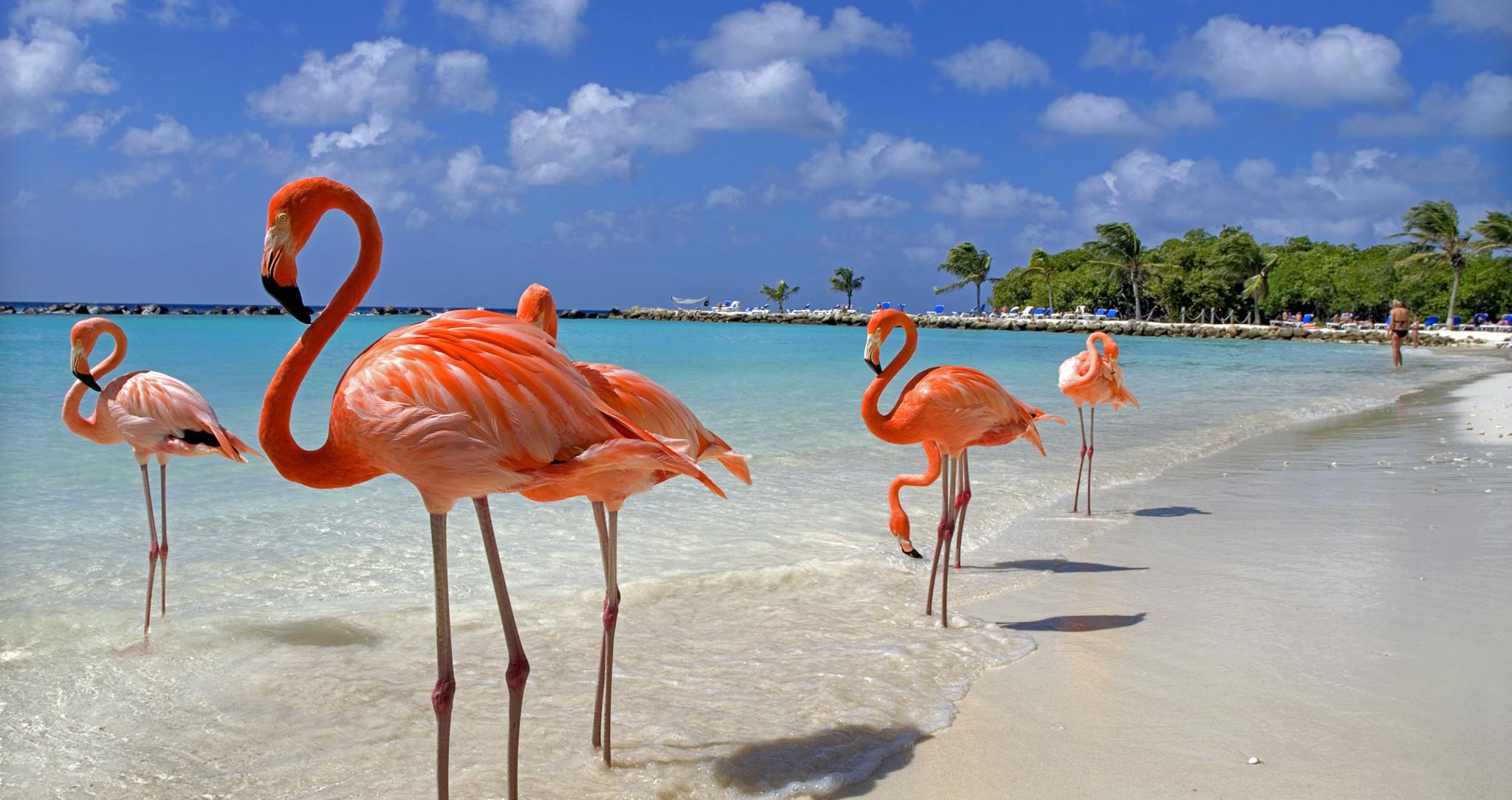 Aux bahamas un h tel recherche une personne pour s for Recherche personne pour tondre pelouse