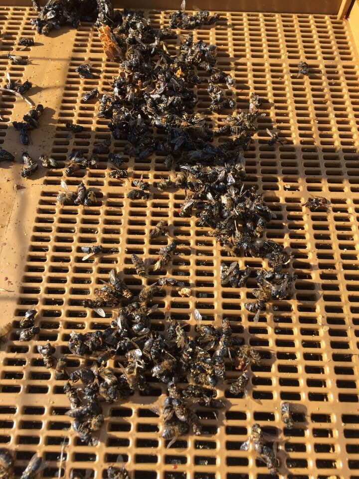 apiculteur tabasse