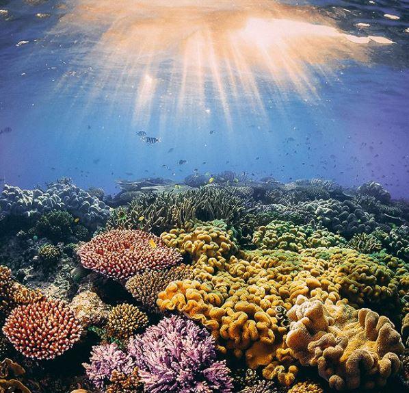 Une campagne choc, centrée sur des photos avant et après retouches pour nous sensibiliser à l'écologie, lancée par WWF ! Par Hugo N. B1