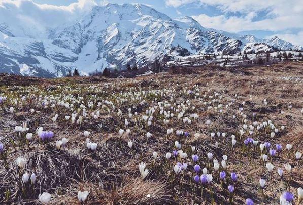 Une campagne choc, centrée sur des photos avant et après retouches pour nous sensibiliser à l'écologie, lancée par WWF ! Par Hugo N. F1