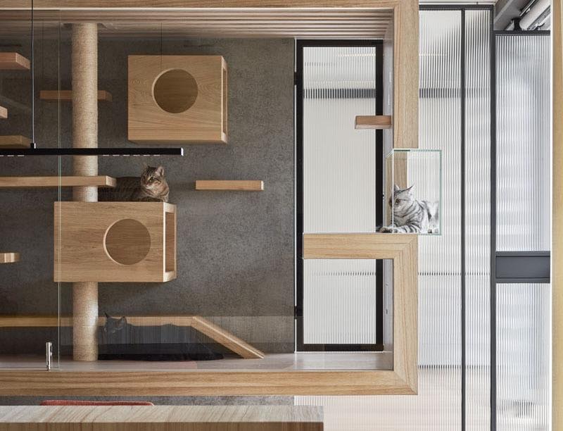 Cet espace de jeu pour chats en verre et en bois s'intègre parfaitement à la décoration de votre ...