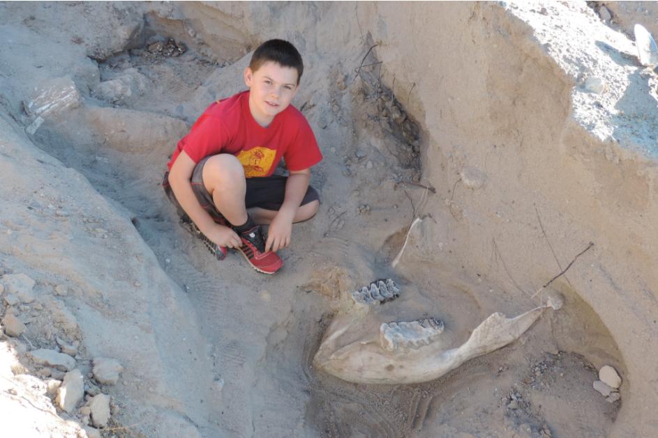 Un enfant découvre un fossile vieux de 1,2 million d'années alors qu'il se promenait avec sa famille ! Par Timothé G. Capture%20d%E2%80%99e%CC%81cran%202017-07-20%20a%CC%80%2011.12.18