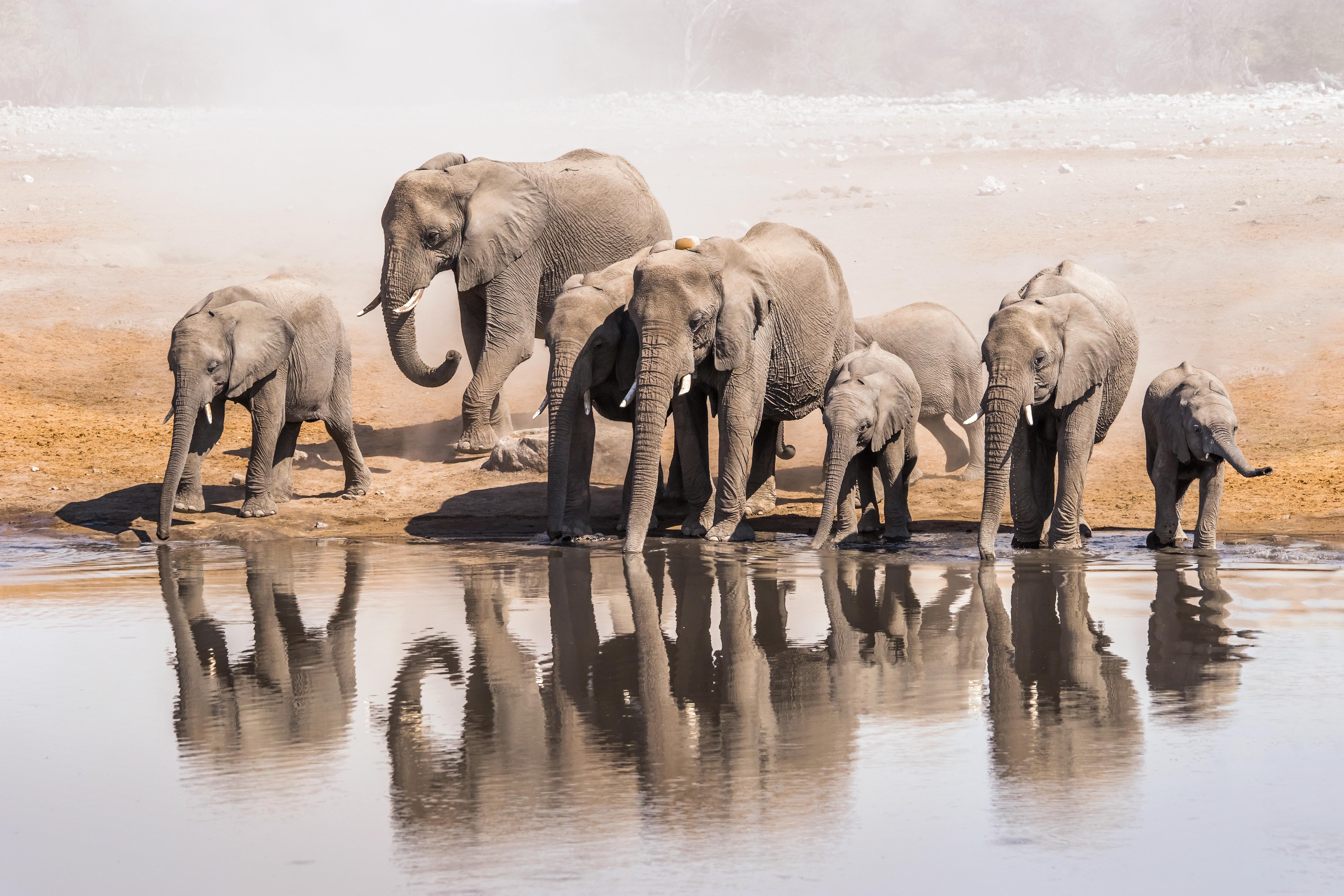 Namibie : un chasseur meurt piétiné par un éléphant