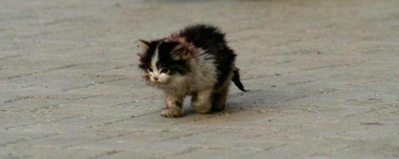 les meilleurs chat Saint-Maur-des-Fossés
