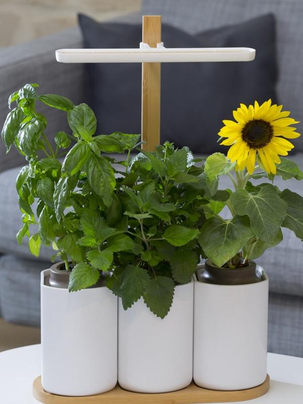 on a test lilo le potager d 39 int rieur urbain intelligent et autonome pour ne plus tre. Black Bedroom Furniture Sets. Home Design Ideas