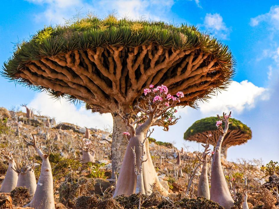 Île de Socotra, Yémen