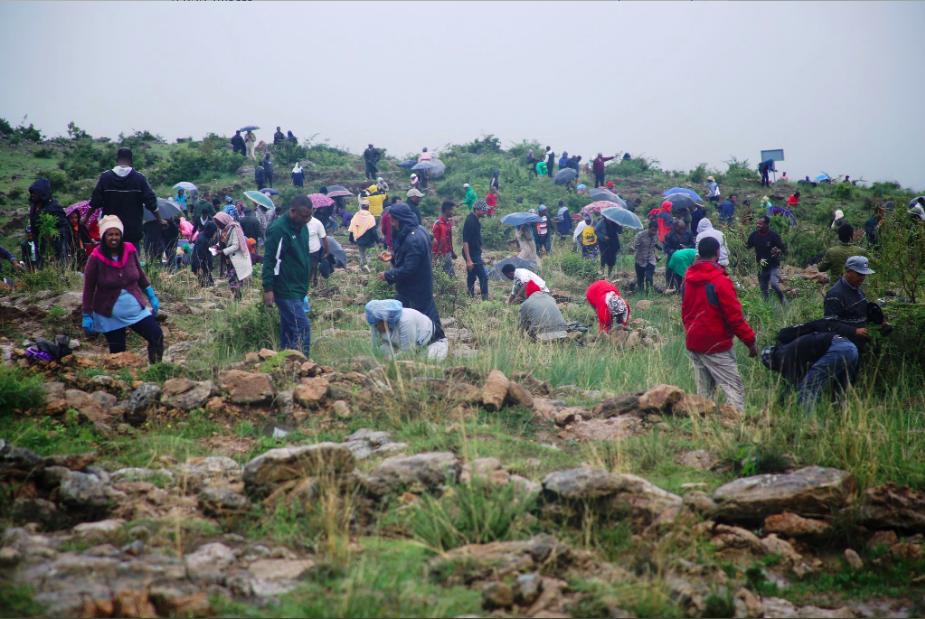 Plus de 350 millions d'arbres replantés en une journée — Ethiopie