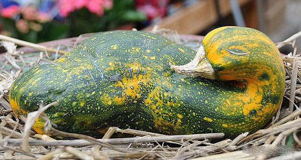 http://www.demotivateur.fr/images-buzz/10fruits-legumes-bizarre.jpg