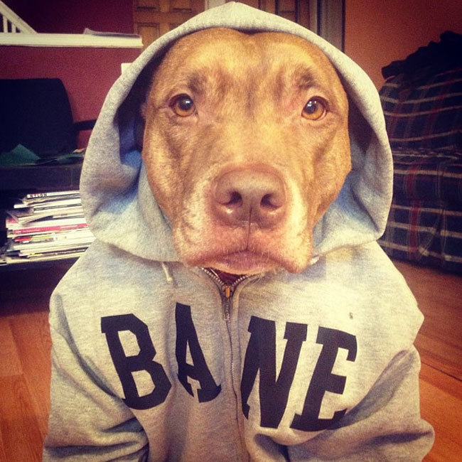 N'importe quelle chienne peut truquer