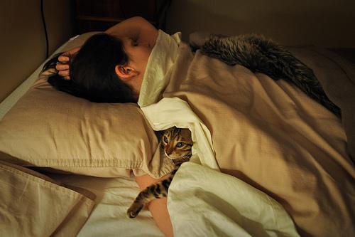 11 situations que tous les propri taires de chats. Black Bedroom Furniture Sets. Home Design Ideas