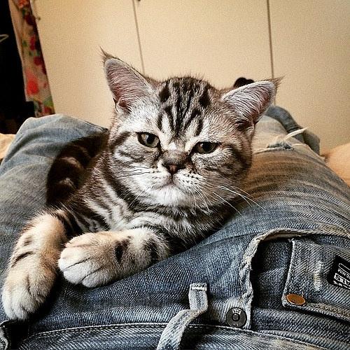 8 comportements de votre chat qui vous prouveront qu 39 il vous adore la 7 est bien videmment - Chat qui dort sur son maitre ...
