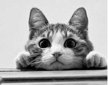 reviennent avec leur proie. Oiseaux, souris Votre chat vous a,t,il  déjà ramené des animaux qu\u0027ils ont chassé ? Sachez qu\u0027en fait il vous ait