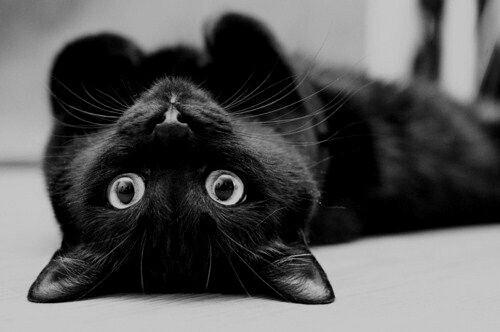 8 comportements de votre chat qui vous prouveront qu 39 il vous adore la 7 est bien videmment. Black Bedroom Furniture Sets. Home Design Ideas