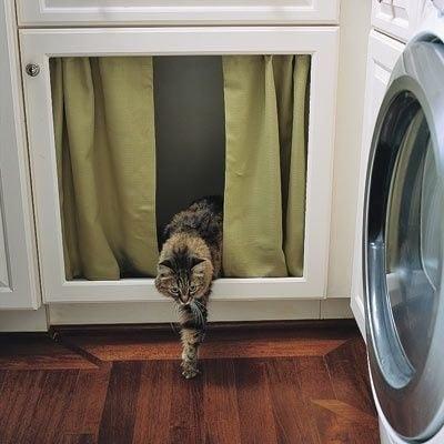 L'image parfaite de la chatte