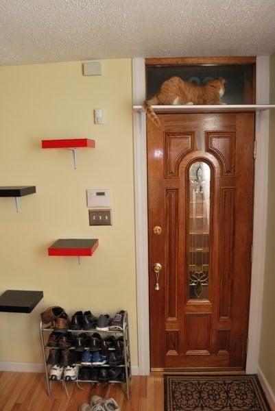 conseils pratiques pour vos chats  C