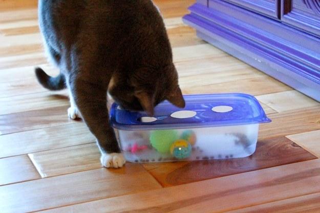 conseils pratiques pour vos chats  H