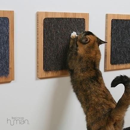 conseils pratiques pour vos chats  K