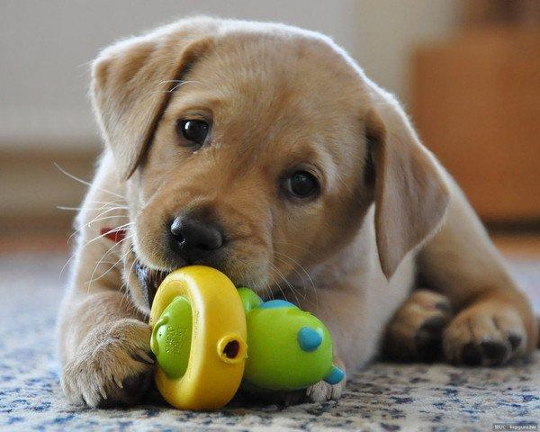 Top Vous voulez adopter un chien ? Ne vous laissez surtout pas tenter  CZ03