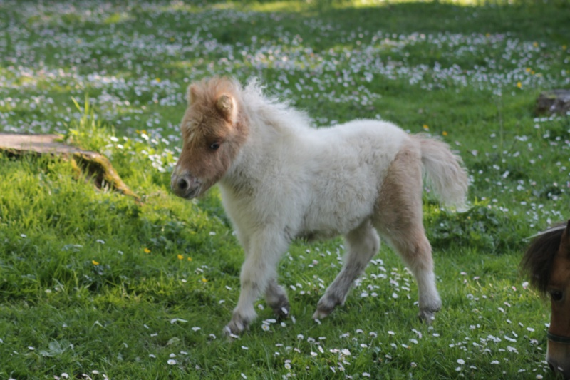 Connu 25 chevaux miniatures qui vont vous donner envie de les adopter  AJ58