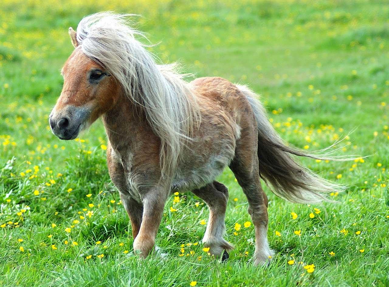 Top 25 chevaux miniatures qui vont vous donner envie de les adopter  IE11