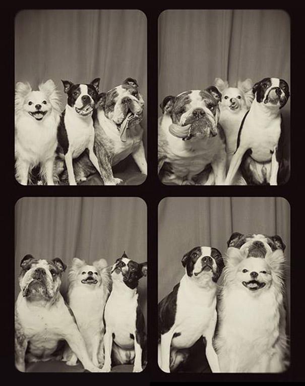 elle met deux chiens dans un photomaton leur r action face l 39 objectif va vous faire craquer. Black Bedroom Furniture Sets. Home Design Ideas