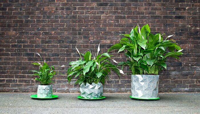 D couvrez un pot de fleurs en origami qui grandit mesure for Plante qui pousse