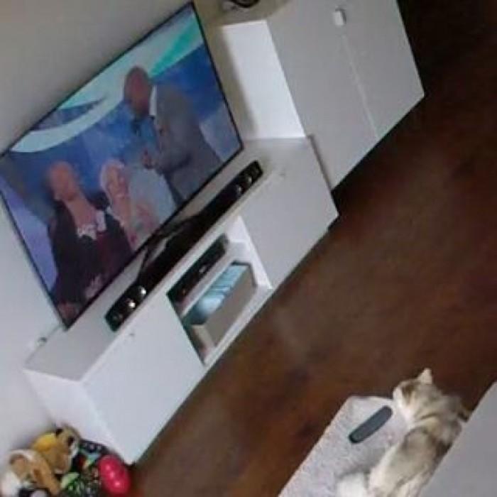 Voil ce qui se passe quand un chien est seul la maison - Quoi mettre sur une table basse ...