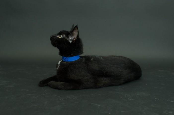 Mignons ou flippants les chats noirs ? Avec cette série de photos en tout  cas l\u0027objectif est réussi pour l\u0027artiste, on ne peut répondre que d\u0027une  seule (et