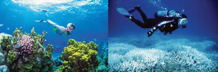 Imaginons le réchauffement climatique Reefbleach
