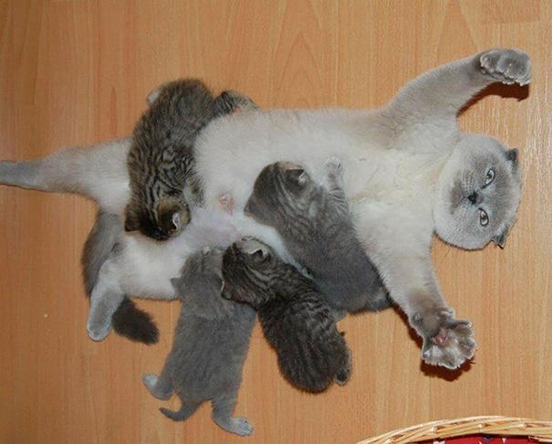 minuscule serré chatte photos chatte orgie