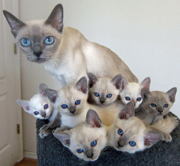 Les chats - nos petits compagnons K