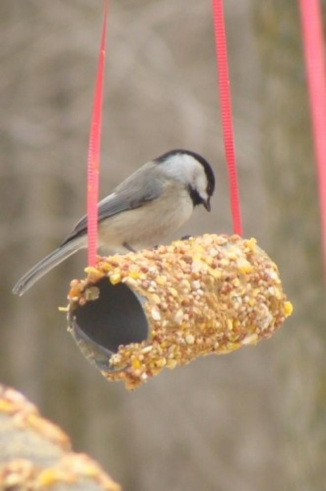 Diy 20 fa ons g niales de donner une seconde vie - Faire peur aux oiseaux jardin ...