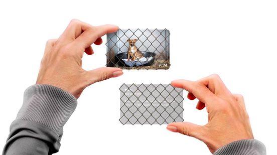 Une Carte De Visite Pour Lassociation PETA Association Dfense Des Droits Animaux