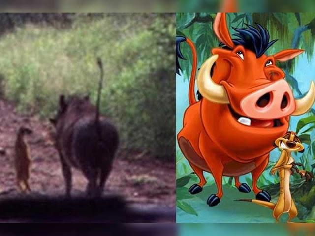 11 photos troublantes qui prouvent que les personnages de - Les aventures de timon et pumba ...