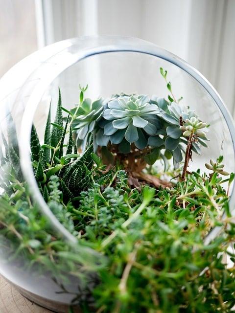 27 Idees Creatives Pour Realiser De Superbes Terrariums Pour Votre